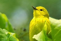 birds / by Zen Kanie