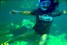 We love our Trippers! / Photos from Trippers around the world:  from Bahrain to Easter Island, atop high cliffs and under water - Trippers are everywhere! / by Tripping