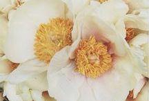 Blossom & Bloom / by Sarah Burton