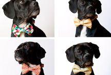 Puppy Love / by Brielle Jones