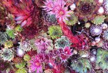 Succulent Love / by Leah Bergman / Freutcake