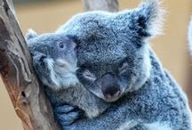 Things that Make You Go D'awww / Super adorable things. Mostly furry animals. They're just so sweet! / by Kaley S