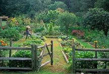Garden / by Kerry Tadique