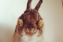 too cute!!! / by Bella Thorne