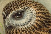 OWLS / by Judy Cote