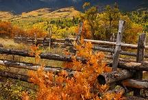 Fall / by Gail Henderson