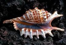 Sea Shells by the Sea Shore / by Gail Henderson