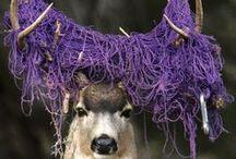 Purples / by Allison Turner