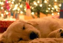 Yule...  Christmas / by Allison Turner