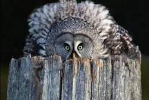 OK OK Got to have an owl board / by Anita Ghaemi