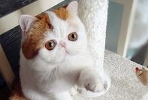 My Favorite Internet Cats / Maru, Snoopy, Pancake . . . / by Evil Cat