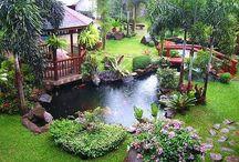 Flowers, gardens, fairys, ponds, and birds oh my! / by Nancy Bradford