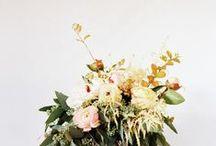 HOME / blooms / by Caroline Joy Rector