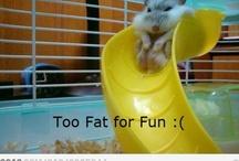 Funny! / by Rachel Lovelace