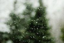 Autumn & Winter / by Joanne Bischof, Author