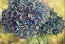 Spring & Summer / by Joanne Bischof, Author