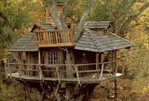 Tree Houses / I'm getting ready to build a treehouse for my kids. I thought these would give me ideas. Good thing we live in the mountains and have lots of trees. / by Mark Edmonds