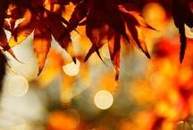 Fall / by Sue Moorhouse Lombardo