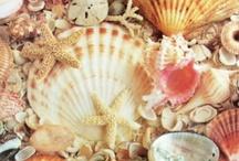 Seashells / by Diane Hopkins