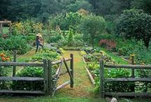 Kitchen Gardens / Potagers or kitchen gardens are as varied as their owner gardeners. Check out our collection of kitchen gardens and tips for growing vegetables and fruiting plants. / by Greenwood Nursery