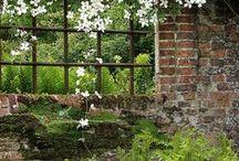 Garden / by Melissa Burke Cookingham