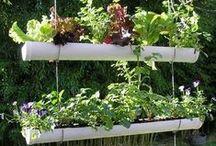 Vertical Gardening Ideas / by Monica Teinert