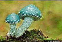 Mushrooms / by Haley Springer