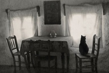 cat in black & white  / by Heea