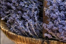 lavender / by abouterleichda