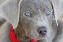 Dogs / by Heartland Veterinary Supply