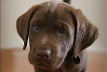 Animals/Adorable Pets / by Bronze Magazine
