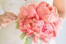 Wedding / by Amelia Grieve