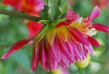 Pretty Flowers & Plants / by Donna Allison
