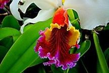 Orchids, the beauties / by Margaret Worsham