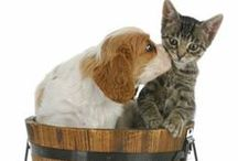Pets / Pets are part of the family. / by AllergyStore.com
