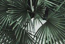 Plants / Plants, plants & more plants.  / by Roar Sager