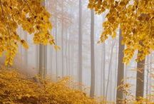 Beautiful World - Autumn / by relivingforever