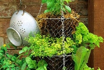 Garden Ideas / by Diana Pappas