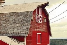Addicted to Barns / I want to own a barn some day....maybe God will let me live in one in heaven. / by Kristin McGee