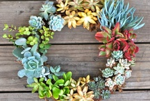 Succulents / by Laurie Brinegar