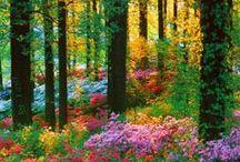 ~My Garden~ / by Lizzy A.