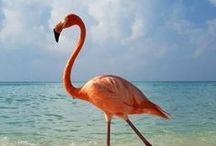 Fabulous Flamingos  / by Lisa Pannell Pitkin