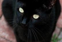 Black Cat / by Jenelle Thomas