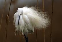 animal photography / by Agnese Gambini