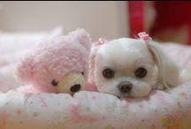 So cute!  / by Aneta W