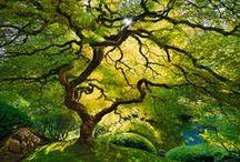 Magic of Trees / by Aneta W