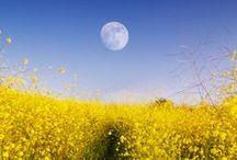 Sun, Moon, Stars / by AW