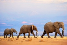 Elephants / by AW
