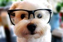 Too Cute! / by Stephanie Holder