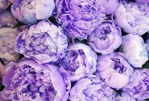 Flowers  / by Danielle Diaz